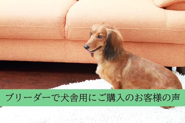 広島市内・ブリーダーで犬舎用に次亜塩素酸水を購入したお客様のお声