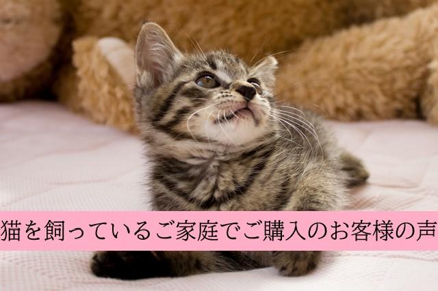 広島市内・猫を飼っている一般家庭で次亜塩素酸水をご購入のお客様のお声
